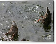 Acrylic Print featuring the photograph Bottoms Up by David Bishop
