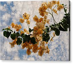 Bougainvillea Bloom Acrylic Print by Rose  Hill