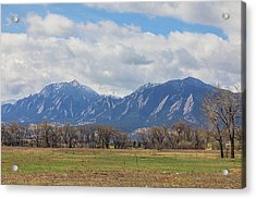 Acrylic Print featuring the photograph Boulder Colorado Prairie Dog View  by James BO Insogna