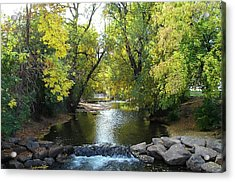 Boulder Creek Tumbling Through Early Fall Foliage Acrylic Print