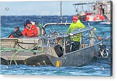 Acrylic Print featuring the photograph Bouncing Herring by Randy Hall