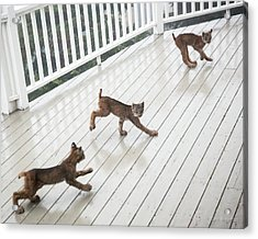 Bouncing Is Best Acrylic Print