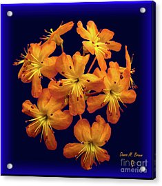 Acrylic Print featuring the digital art Bouquet In A Box by Donna Brown