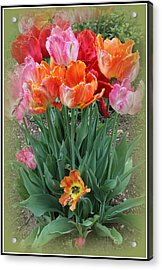 Bouquet Of Colorful Tulips Acrylic Print