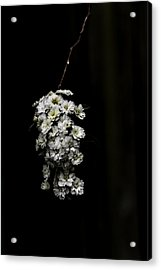 Bouquet Of White Acrylic Print