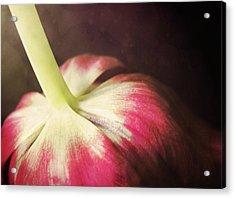 bow Acrylic Print
