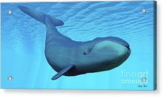 Bowhead Whale Acrylic Print by Corey Ford