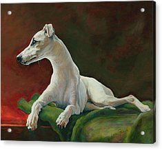 Bowie Whippet Acrylic Print