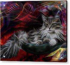 Bowl Of More Fur Acrylic Print by John Robert Beck