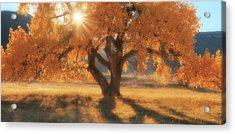 Boxelder's Autumn Tree Acrylic Print