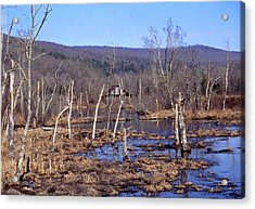 Boxely Swamp2 Acrylic Print by Curtis J Neeley Jr