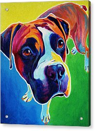 Boxer - Leo Acrylic Print by Alicia VanNoy Call