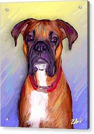 Boxer Beauty Acrylic Print by Karen Derrico