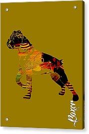 Boxer Collection Acrylic Print