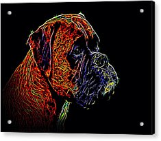 Boxer Dog Acrylic Print by Alexey Bazhan