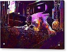 Boxer Dog Lazy Animal Boxer Dog  Acrylic Print