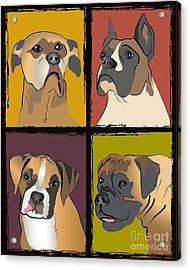 Boxer Dog Portraits Acrylic Print by Robyn Saunders