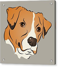 Boxer Mix Dog Graphic Portrait Acrylic Print by MM Anderson