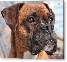 Boxer Portrait Acrylic Print