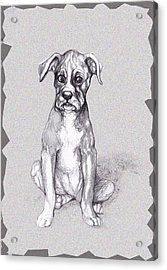 Boxer Pup Acrylic Print by Peggy Wilson