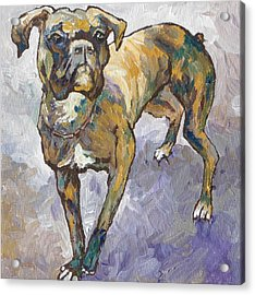 Boxer Acrylic Print by Sandy Tracey