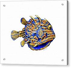 Boxfish II Acrylic Print