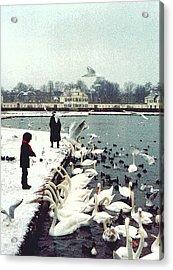 Boy Feeding Swans- Germany Acrylic Print by Nancy Mueller