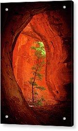Boynton Canyon 04-343 Acrylic Print