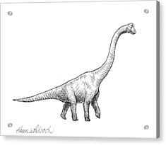 Acrylic Print featuring the drawing Brachiosaurus Black And White Dinosaur Drawing  by Karen Whitworth