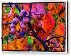 Bradford Pear In Autumn Acrylic Print