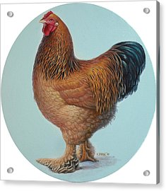 Brahma Rooster Acrylic Print