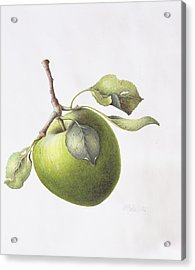 Bramley Apple Acrylic Print by Margaret Ann Eden