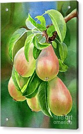 Branch Of Bronze Pears Acrylic Print by Sharon Freeman