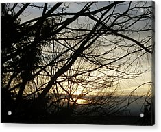 Branches At Sunset Acrylic Print
