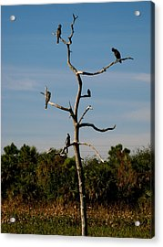 Branches For Birds Acrylic Print by Fanny Diaz