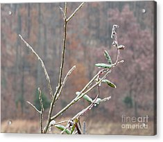 Branches In Ice Acrylic Print