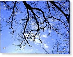 Acrylic Print featuring the photograph Branches by Lois Lepisto