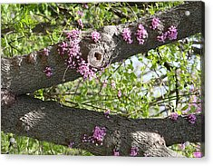 Branches Of Color Acrylic Print by Eric Irion