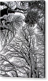 Branches With Snow Acrylic Print by Mark Denham