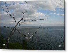 Branching Out Acrylic Print by Dennis Curry