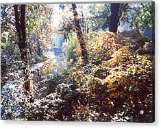 Brandywine Foliage Acrylic Print