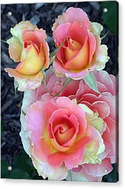 Brass Band Roses Acrylic Print