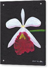 Brassalove Nodosa-rosita Acrylic Print