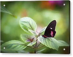 Acrylic Print featuring the photograph Brave Butterfly  by Cindy Lark Hartman