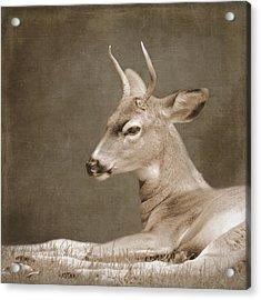 Brave Acrylic Print by Sally Banfill
