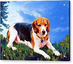 Bravo The Beagle Acrylic Print