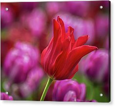 Acrylic Print featuring the photograph Brazenly Delicate by Bill Pevlor