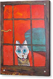 Break And Enter Cat Acrylic Print by AJ Brown