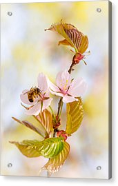 Acrylic Print featuring the photograph Breakfast At Sakura by Alexander Senin