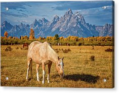 Breakfast In The Tetons Acrylic Print